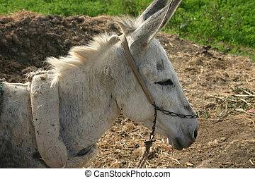 Farmland Donkey
