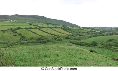 farmland field at wild atlantic way in ireland 74 - nature,...
