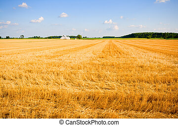 Harvested wheat field in a farm in Central Indiana