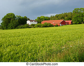 Farmland in Soft light.