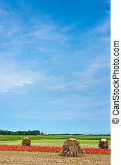 Farmland in the summer