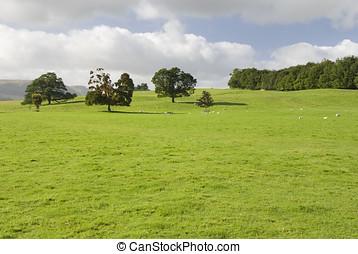 Farmland, Lake District, UK