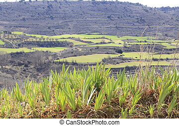 Farmland landscape in the hills