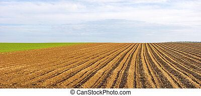 Farmland panorama - brown field