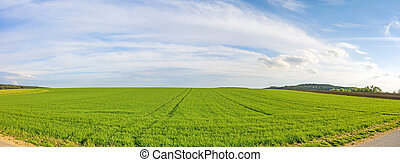 Farmland panorama - green wheat field
