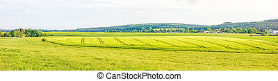 Farmland panorama - wheat field