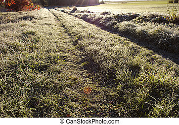 farmland road through frosted grass in morning sunlight
