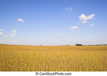 Farmlands and fields - Farm landscapes with sunny maize soy...