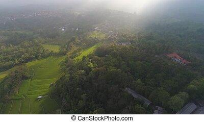farmlands and village Bali, Indonesia. - Aerial view farm ...