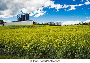 Farm's barn and silosand canola field