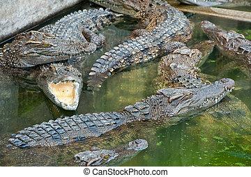 farms Crocodiles
