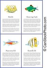 farpa, ilustração, tiger, boxfish, vetorial, verde