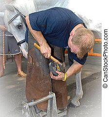 Blacksmith shoeing a gray horse. Hammering the horse shoe nail into the shoe