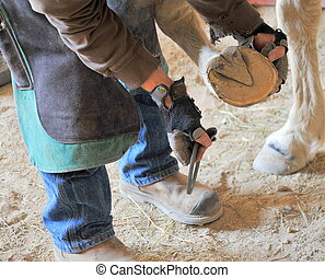 Farrier replacing horseshoes on a horse inside a stable.