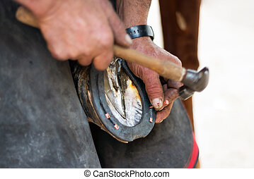 Farrier nailing a horseshoe to the horse