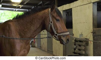 farrier replace horseshoes - the horse is calm while working...