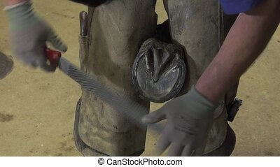 the farrier prepares the horse's hoof