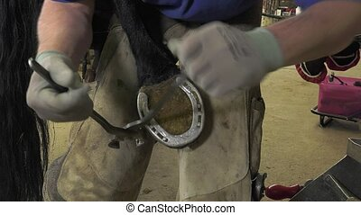 the farrier removes the horseshoe