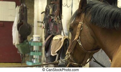 the horse is calm while working farrier