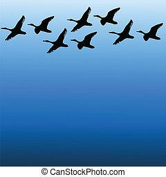 farve, vektor, himmel, fugle, migratory