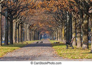 farverig, efterår, park, sceneri, hos, ænder