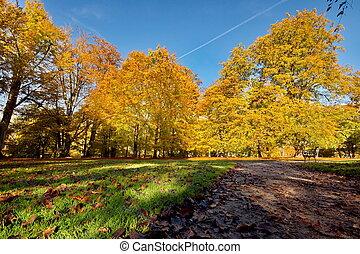 farverig, efterår træ
