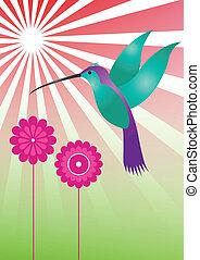 farverig, kolibri