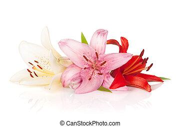 farverig, lilje, blomster