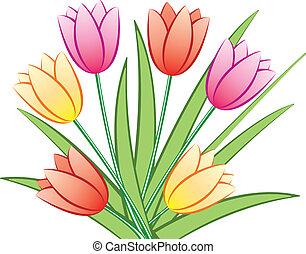 farverig, tulipaner