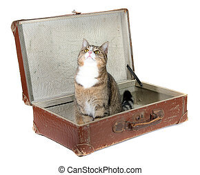 fascinated little cat in old suitcase