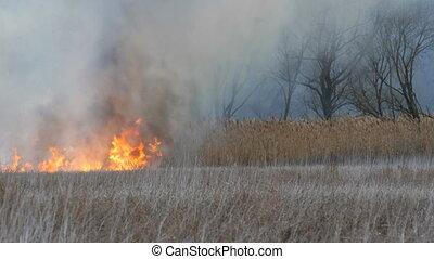Fascinatingly beautiful scene of burning dry high marsh...
