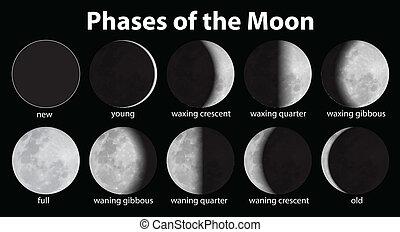 fasen, maan