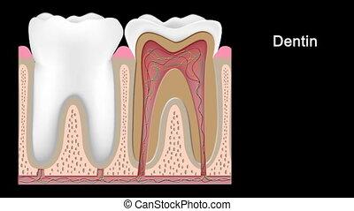 fases, de, decadência dente, hd