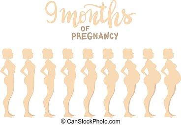 "fases, de, gravidez, 9, months., mulher, lado, vista., caricatura, vetorial, illustration., inscription:, ""9, meses, de, pregnancy"""