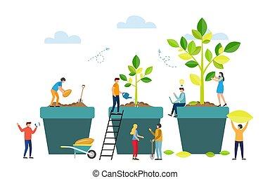 fases, plant., árvore, semente, grande, crescer