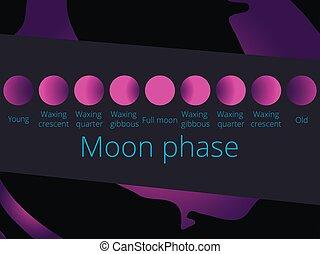 fasi, luna piena, moon., colorare, illustrazione, viola, vettore, mezzaluna