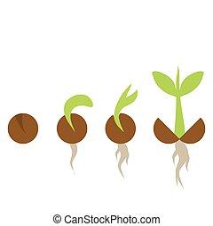 fasi, set, crescita, pianta