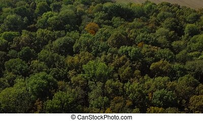 Fast flight over the autumn forest - Aerial view of the...