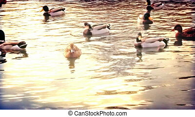 Fast motion ducks  - Fast motion ducks