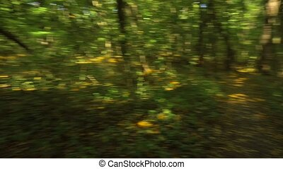 Fast spinning in the forest in summer
