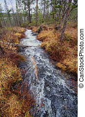 Fast stream in the taiga