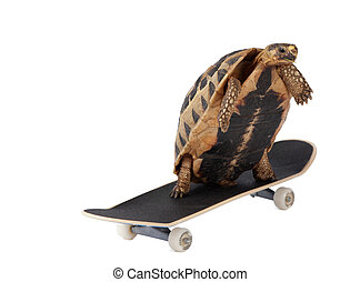 A tortoise is faster than usual because it uses roller skates.