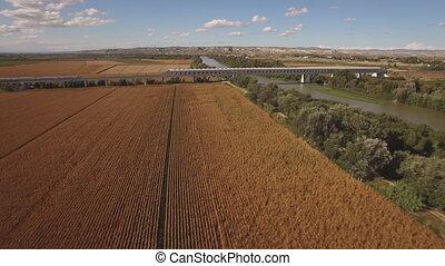 Fast train enters bridge near cultivated corn field and...