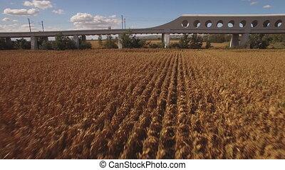 Fast train enters bridge near cultivated corn field - Side...