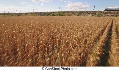 Fast train near cultivated corn field - Side view of train...