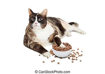 Fat Cat Eating From Overflowing Food Bowl - Fat cat lying...