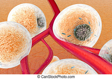 Fat Cells on human tissue - Fat cells in human tissue and...
