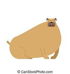 Fat dog. Thick bulldog. Home pet fatso