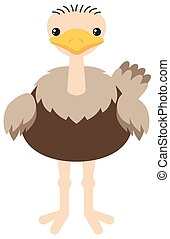 Fat ostrich on white background