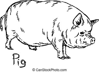 fat pig - vector illustration sketch hand drawn with black lines, isolated on white background